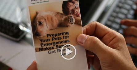 Preparing you pets for emergencies